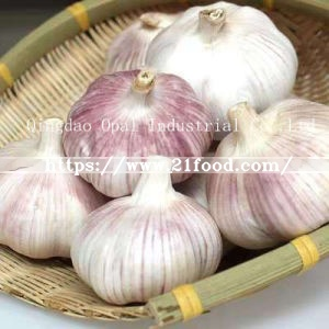 10kg 20kg Mesh Bag Normal Pure White Fresh Garlic From China