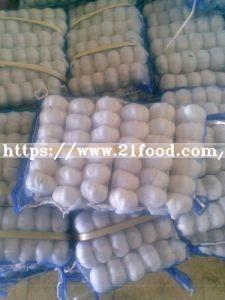 China 2019 New Crop Fresh Garlic
