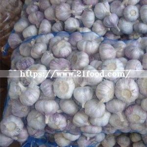 2018 Shandong New Crop Fresh Normal Purple Pure White Garlic