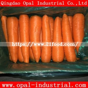 Good Quality New Crop Chinese Vegetable Red Orange Yellow Fresh Carrot