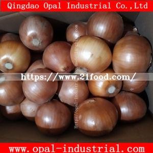 Chinese Carton Fresh Yellow Onion