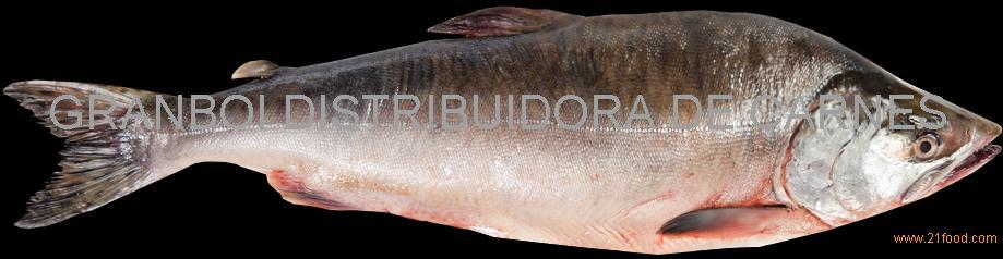 Pink Salmon (Onchorhynchus gorbuscha)