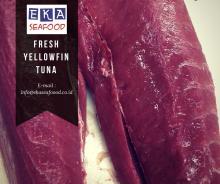 Fresh  Yellowfin   Tuna   loin