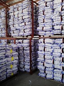 Loose Packing 5-5.5cm Fresh Red Garlic Produced In Jinxiang Shandong China