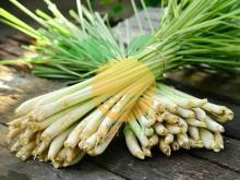 High Quality LEMONGRASS For Sale With Competitive Price