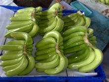 Fresh banana/ green banana/ cavendish banana high quality from Ecuador