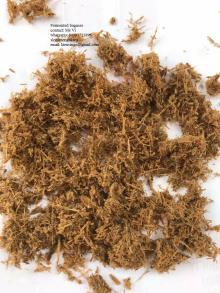 vietnam Fermented bagasse whtasapp 84903721896