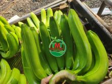 The Best Quality of Fresh Cavendish Banana