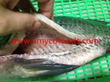 Tilapia Fish Gutted and Scaled produced by professional plant