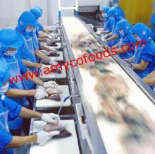 Tilapia Fillet production