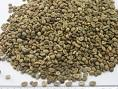 Robuta Coffee beans best quality best price