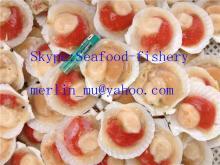 IQF half shell scallops