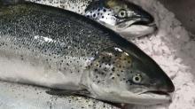 Salmon,Salmon,Salmon