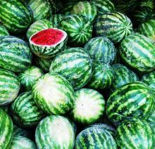 Fresh Water Melon, Fresh Water Melon, Fresh Water Melon