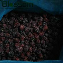 Frozen fruit IQF blackberry