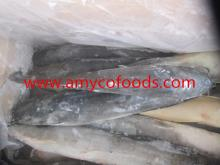 Frozen Catfish Whole Round high quality fresh healthy