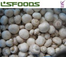 IQF  Frozen Champignon Mushroom  White  Button Mushroom