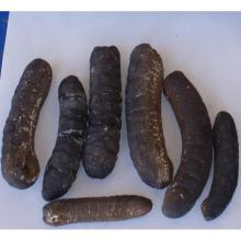 DRIED AND FROZEN SEA CUCUMBER