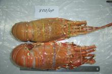 Whole Frozen Cooked Lobster