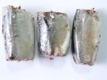 CANNED SPANISH MACKEREL IN BRINE, OIL, TOMATO SAUCE