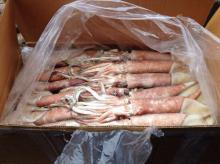 Seafrozen squid for cooked or canned