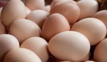 BROWN CHICKEN EGGS / WHITE CHICKEN EGGS