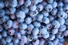 Hot Sale Frozen Blueberries ,lingonberries,