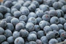 IQF Blueberries,lingonberries and cranberries available