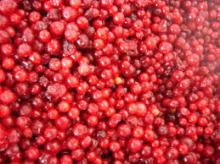 Frozen Lingonberry on sale now
