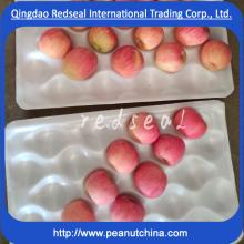 2015 delicious Fuji apple