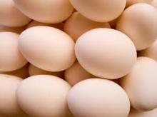 Fresh White Chicken Eggs / Fresh Chicken Eggs For Sale
