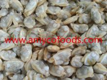 Frozen Short Necked Clam Meat Healthy seafood