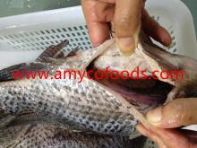 Tilapia GS processed from alive raw material