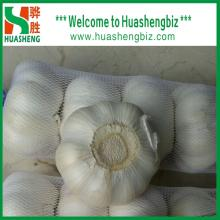 Hot Selling Chinese Fresh Garlic