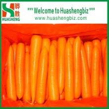 Chinese Fresh Carrots