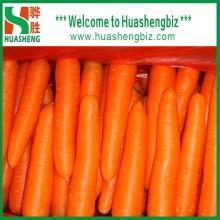 China Fresh Red Carrot from Huashengbiz