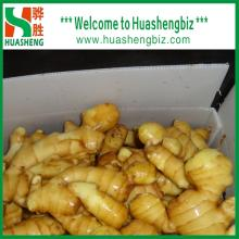 Chinese Freshest Ginger from Huashengbiz