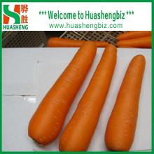 Hot Selling Chinese New Crop Fresh Carrots