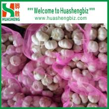 Best Quality China Normal White Garlic