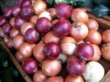 New Crop Fresh Onions