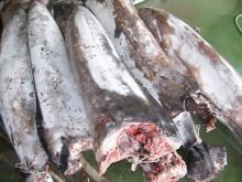 Frozen swordfish
