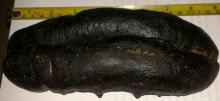 Best Price Sea Cucumber