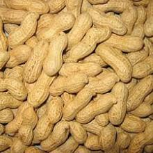 Raw Peanut,Cashew nut,pine nuts and other nuts for sale