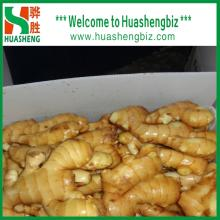 High Quality China New Fresh Ginger