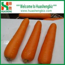 Wholesale High Quality Chinese Fresh Carrot