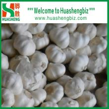 Chinese High Quality Normal White/Pure White Garlic