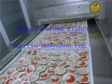 Frozen scallops half shell
