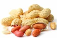 Peanuts In Shell for Export
