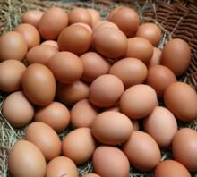 Fresh Chicken Eggs-Fresh Brown Chicken Eggs.