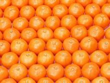Quality Mandarin oranges for sale